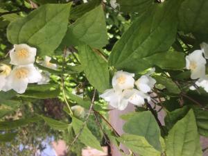 Faune et Flore 2-6P (124)