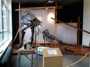 Iguanodon Nora (151)